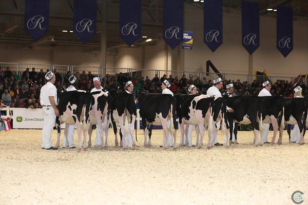 Royal16_Holstein_L32A3691