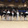 Royal16_Holstein_L32A3700