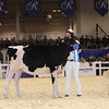 Royal16_Holstein_1M9A9677