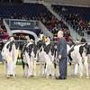 Royal16_Holstein_L32A3857