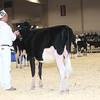 Royal16_Holstein_L32A3641