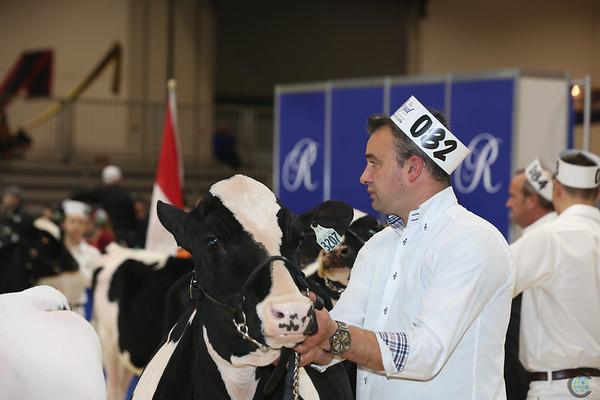 Royal16_Holstein_L32A3732