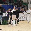 Royal16_Holstein_L32A3657