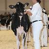 Royal16_Holstein_L32A3644