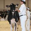 Royal16_Holstein_L32A3645