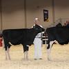 Royal16_Holstein_1M9A9694