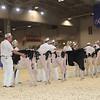 Royal16_Holstein_1M9A9526