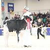 Royal16_Holstein_L32A3597