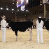 Royal16_Holstein_1M9A9577