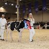 Royal16_Holstein_1M9A9558