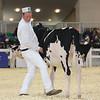 Royal16_Holstein_L32A3620