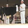 Royal16_Holstein_L32A3715
