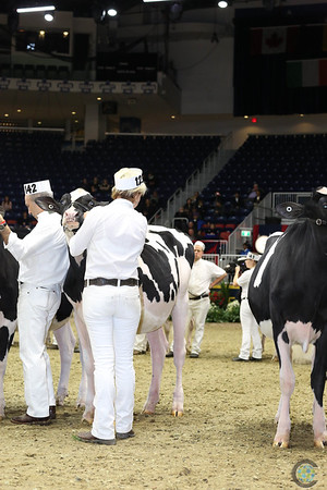 Royal16_Holstein_L32A3825