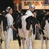 Royal16_Holstein_L32A3765