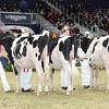 Royal16_Holstein_L32A3854