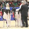 Royal16_Holstein_L32A3578