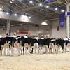 Royal16_Holstein_1M9A9593