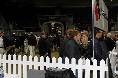 RWF Holstein Candids 2016