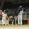 Royal16_Holstein_L32A4284