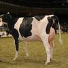 Royal16_Holstein_1M9A0649