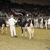 Royal16_Holstein_1M9A0399
