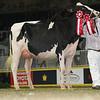 Royal16_Holstein_L32A4283