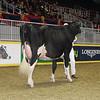 Royal16_Holstein_1M9A0600
