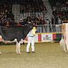 Royal16_Holstein_1M9A0585
