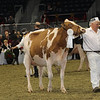 Royal16_Holstein_1M9A0533