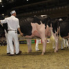 Royal16_Holstein_1M9A0663
