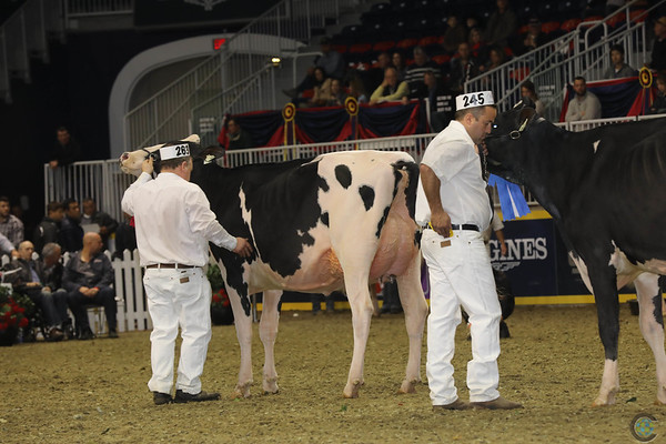 Royal16_Holstein_1M9A0446