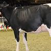 Royal16_Holstein_1M9A0629