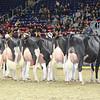 Royal16_Holstein_L32A4436