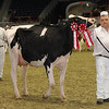 Royal16_Holstein_1M9A0419