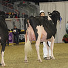 Royal16_Holstein_1M9A0744