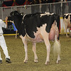 Royal16_Holstein_1M9A0727