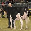 Royal16_Holstein_1M9A0734