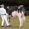 Royal16_Holstein_L32A4208