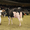 Royal16_Holstein_1M9A0641