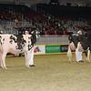 Royal16_Holstein_1M9A0584