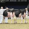 Royal16_Holstein_L32A4401