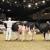 Royal16_Holstein_1M9A0672