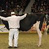 Royal16_Holstein_1M9A0736