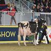 Royal16_Holstein_1M9A0754
