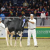 Royal16_Holstein_L32A4277