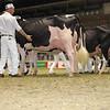 Royal16_Holstein_1M9A0657