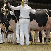 Royal16_Holstein_1M9A0797