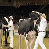 Royal16_Holstein_1M9A0790
