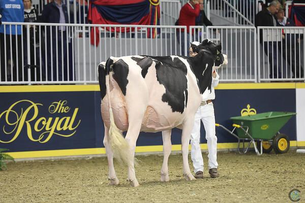 Royal16_Holstein_1M9A0760