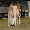 Royal16_Holstein_1M9A0573